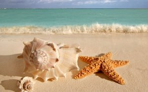 shell-rapana-sea-star-beach-sand-summer