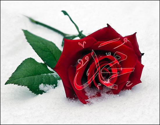 20070331_214900_gül_Muhammed_SA